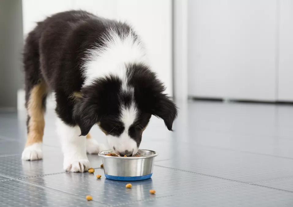 Best Dog Food for Border Collies Buying Guide