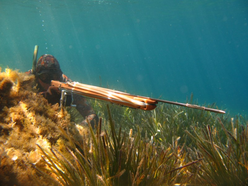 Best Speargun for Beginners | Top 5 Picks | Buying Guide