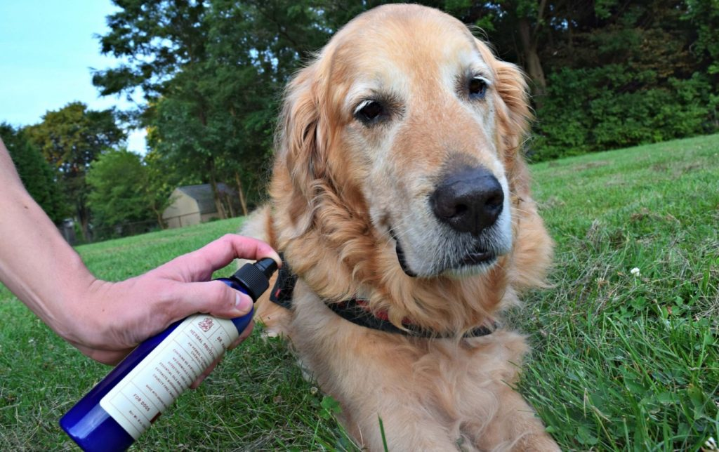 Best Natural Flea and Tick Prevention for Dogs Review