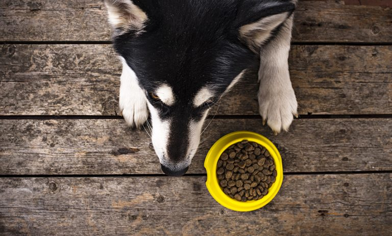 Best Dog Food for Sensitive Stomach and Gas Review