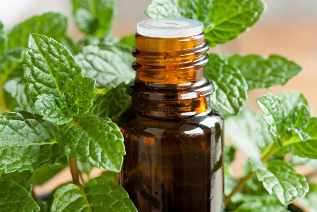 Best Essential Oil for Sinus Headache Review & Buying Guide