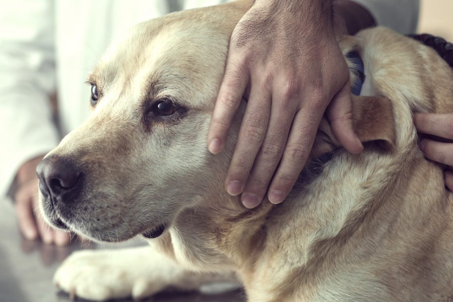 How to Euthanize a Dog at Home With Medication