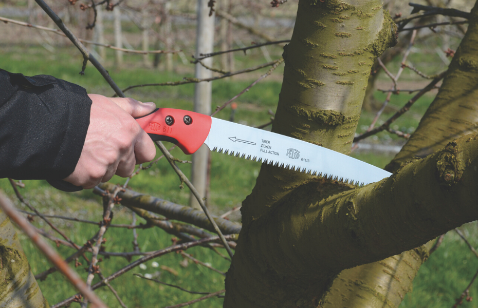 Best Hand Saw for Cutting Tree Trunks Review & Buying Guide