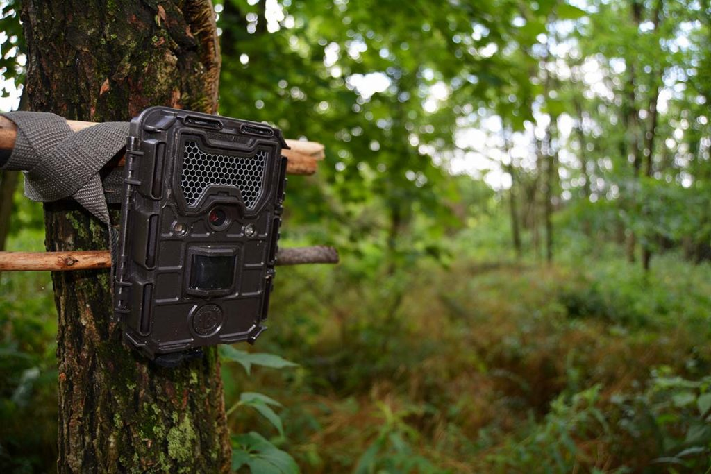 Best Wildlife Camera Under $1000 Review & Buying Guide